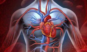 Завтрак дя ваших сосудов: что нужно есть на завтрак, чтобы сердце и сосуды были здоровы
