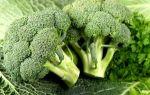 Самые полезные продукты для поджелудочной железы