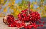 Время запасаться калиной: чем полезна ягода для здоровья