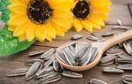 Польза семян подсолнечника и их правильное употребление