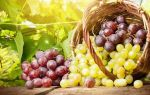 Виноград в лечении различных заболеваний