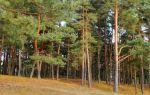 Дендротерапия или почему деревья нам помогают