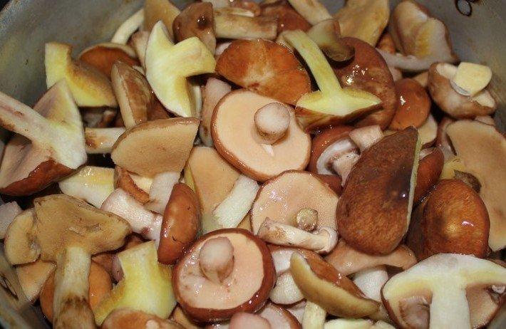 маслята грибы