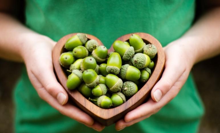 зеленые желуди