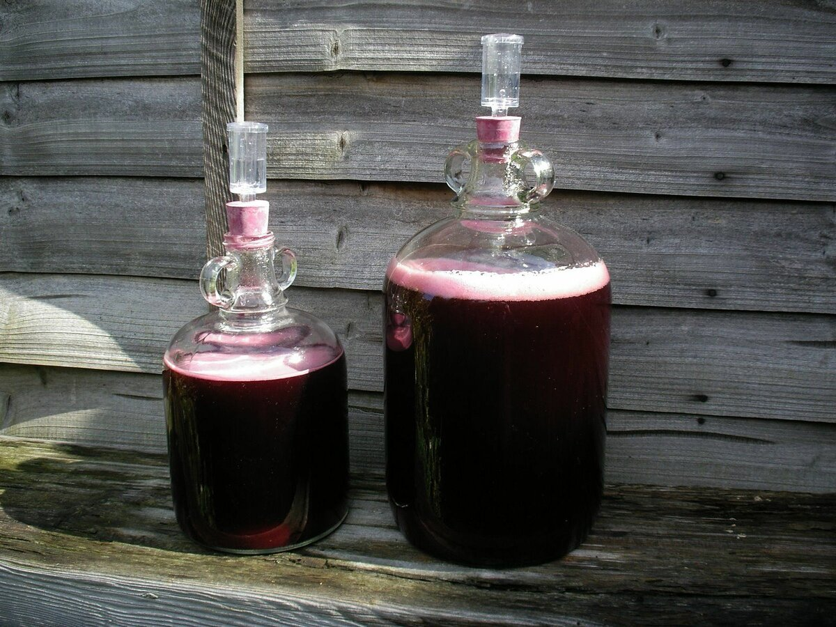 вино бродит