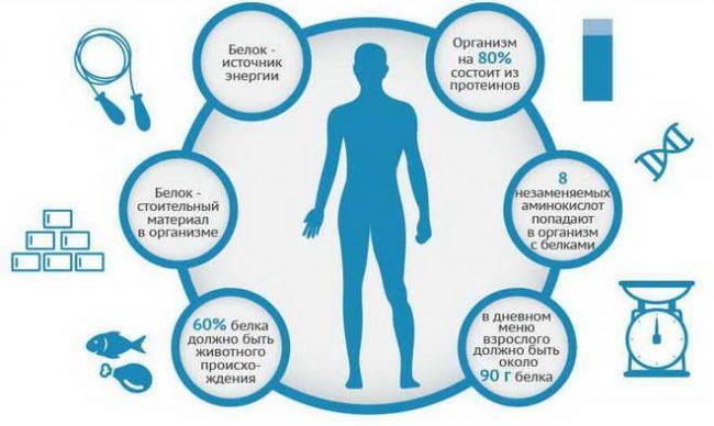 Для чего нужен белок и сколько его нужно для здоровой работы организма: 5 способов контролировать белок