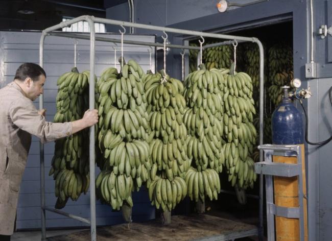Полезны ли фрукты: какие 4 фрукта лучше исключить из рациона