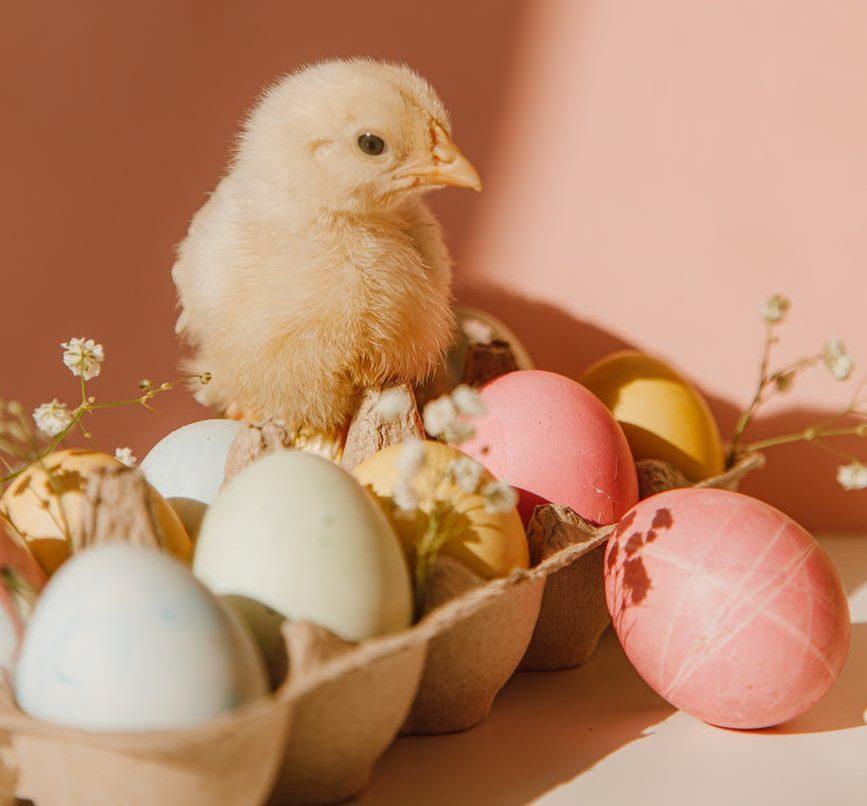 Мясо и яйца полезны, но сочетать их не стоит
